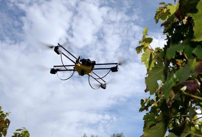 Drónok védik meg a jövő szőlőjét